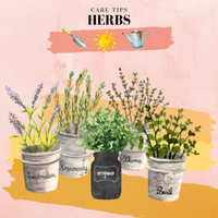 Care Tips for Some of Our Favourite Herbs