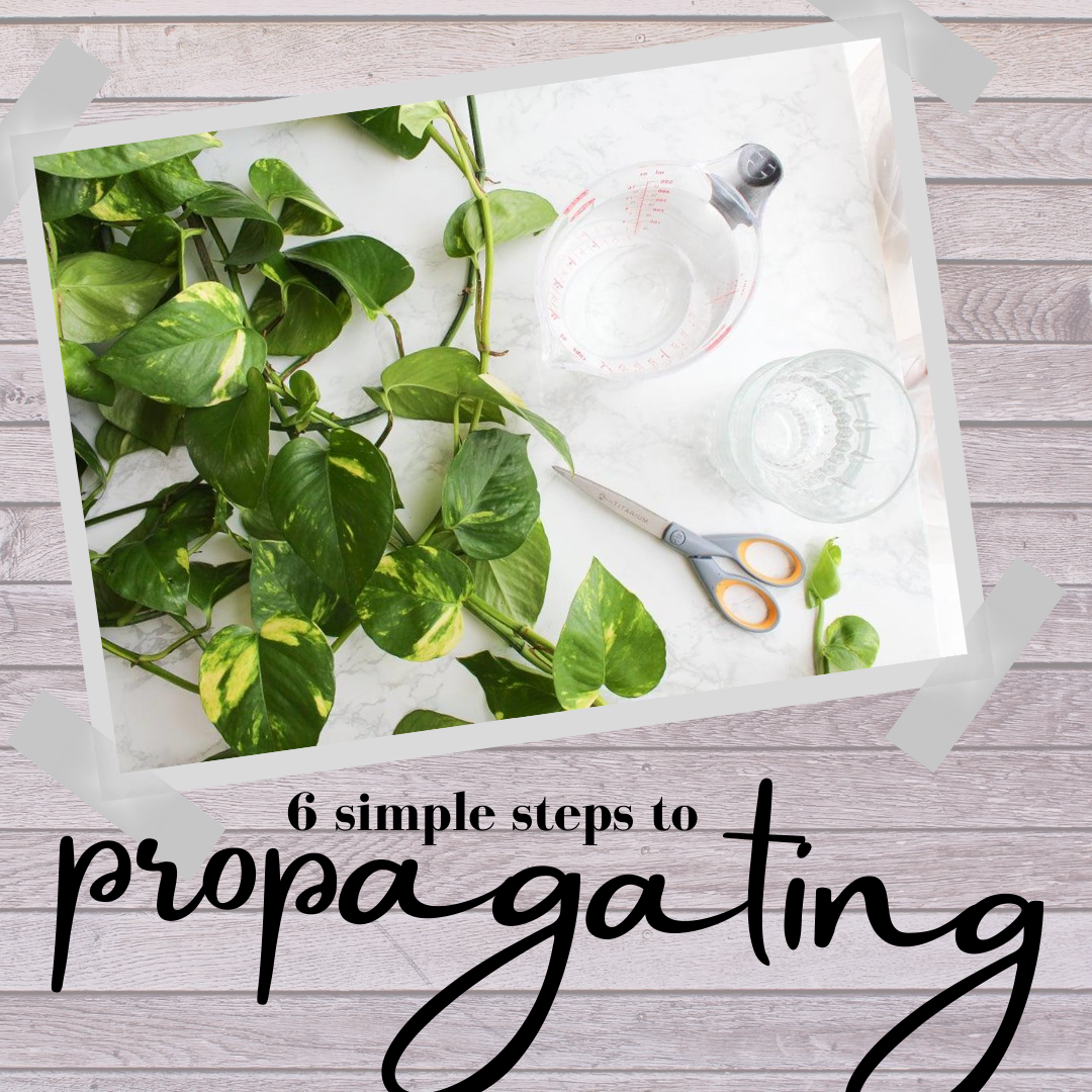 6 Simple Steps to Propogating