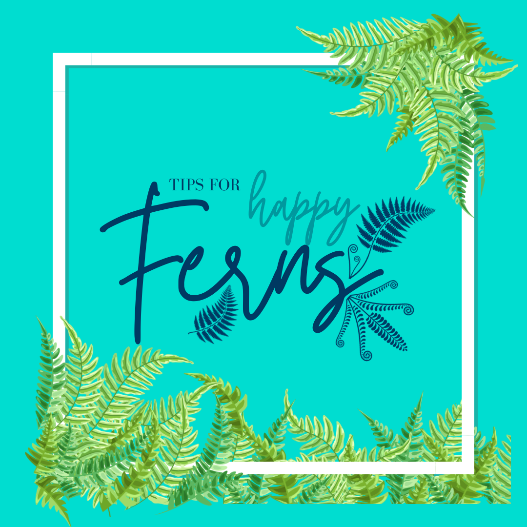 Tips For Happy Ferns