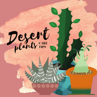 Desert Plants Care Tips