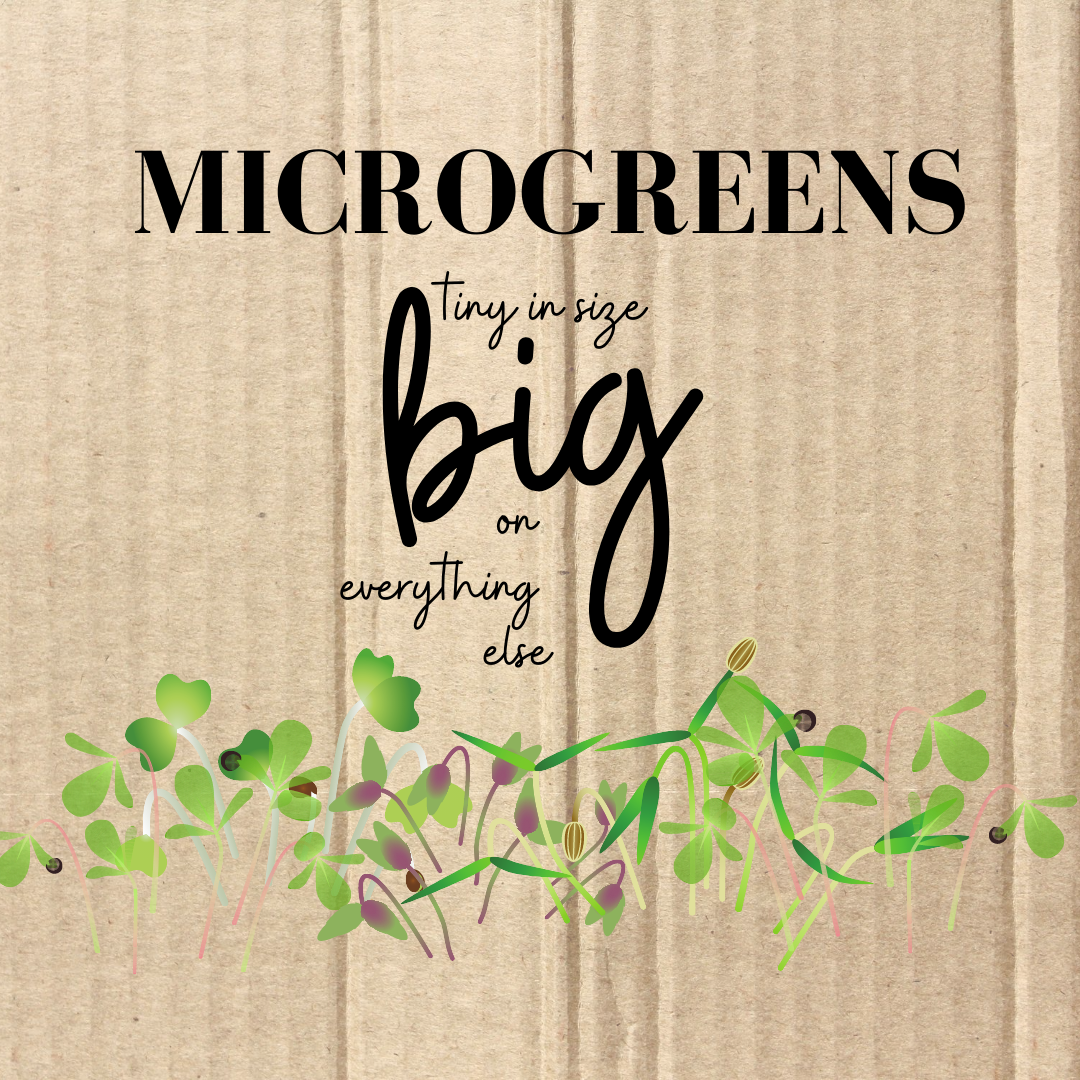 Microgreens – itsy bitsy leaves packed with tons of good stuff