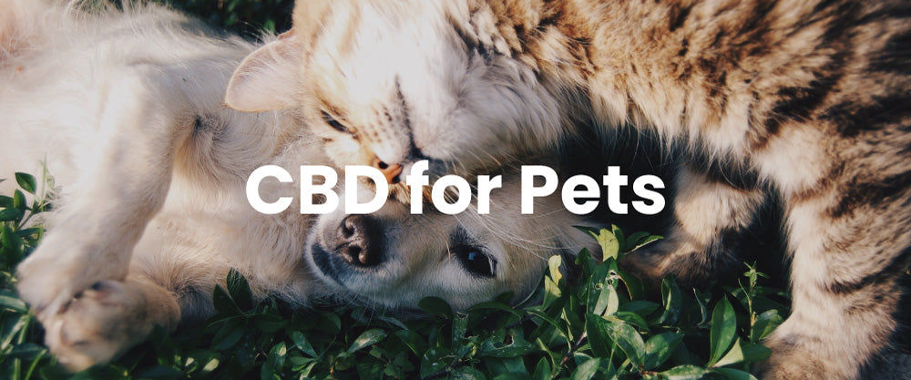 CBD Oil for Dogs and Cats.