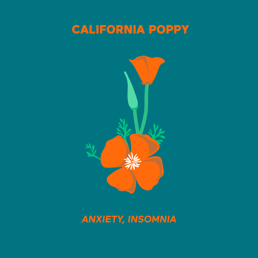 Hilani California Poppy