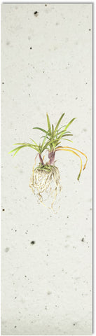 Bookmark | Botanical Plant