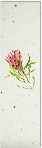 Bookmark | Protea
