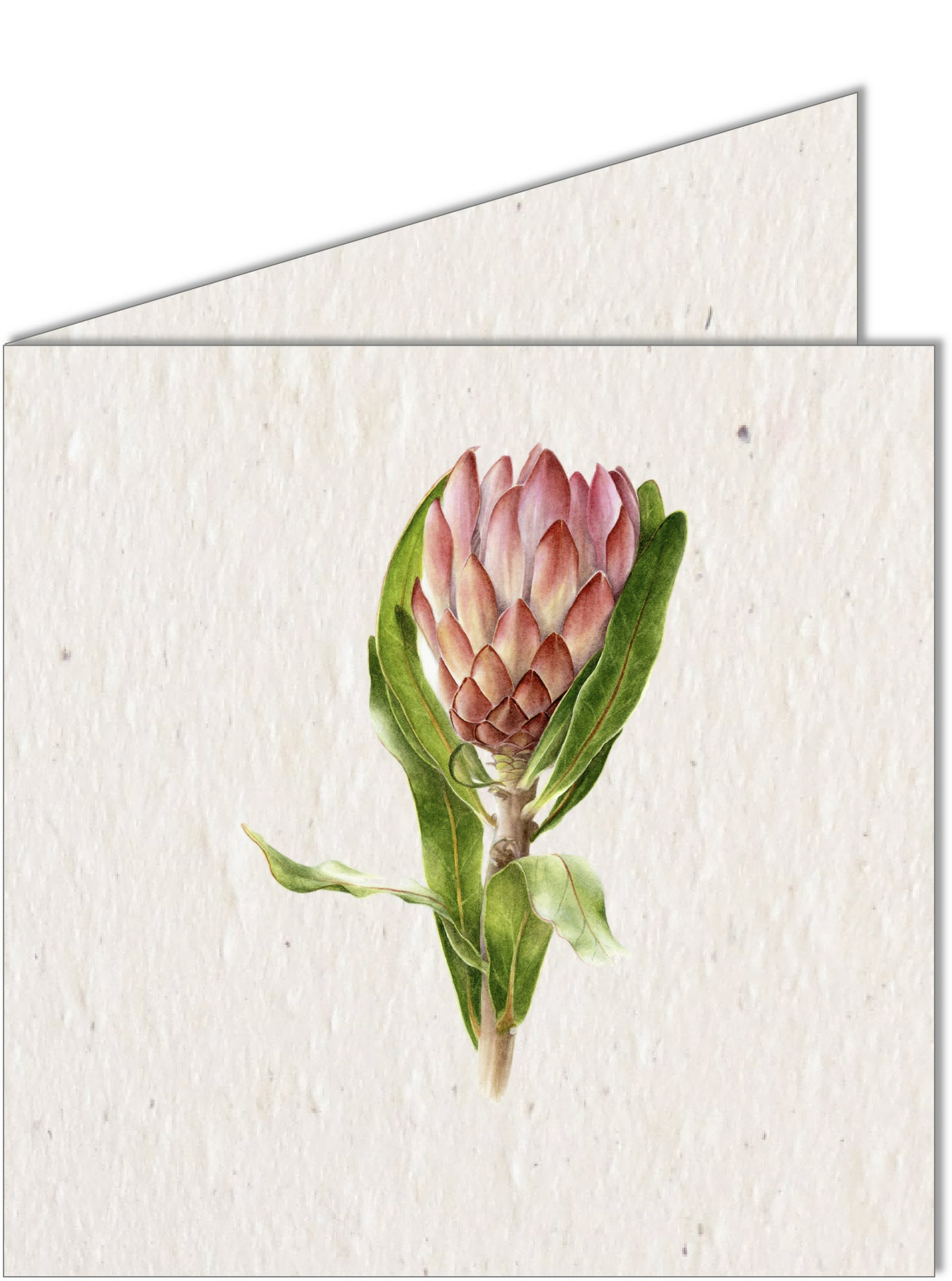 Greeting Card | Protea