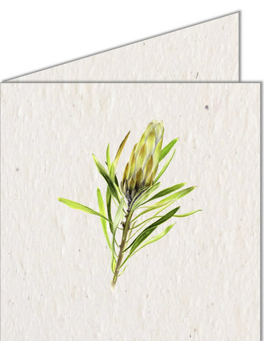 Greeting Card | Green Protea