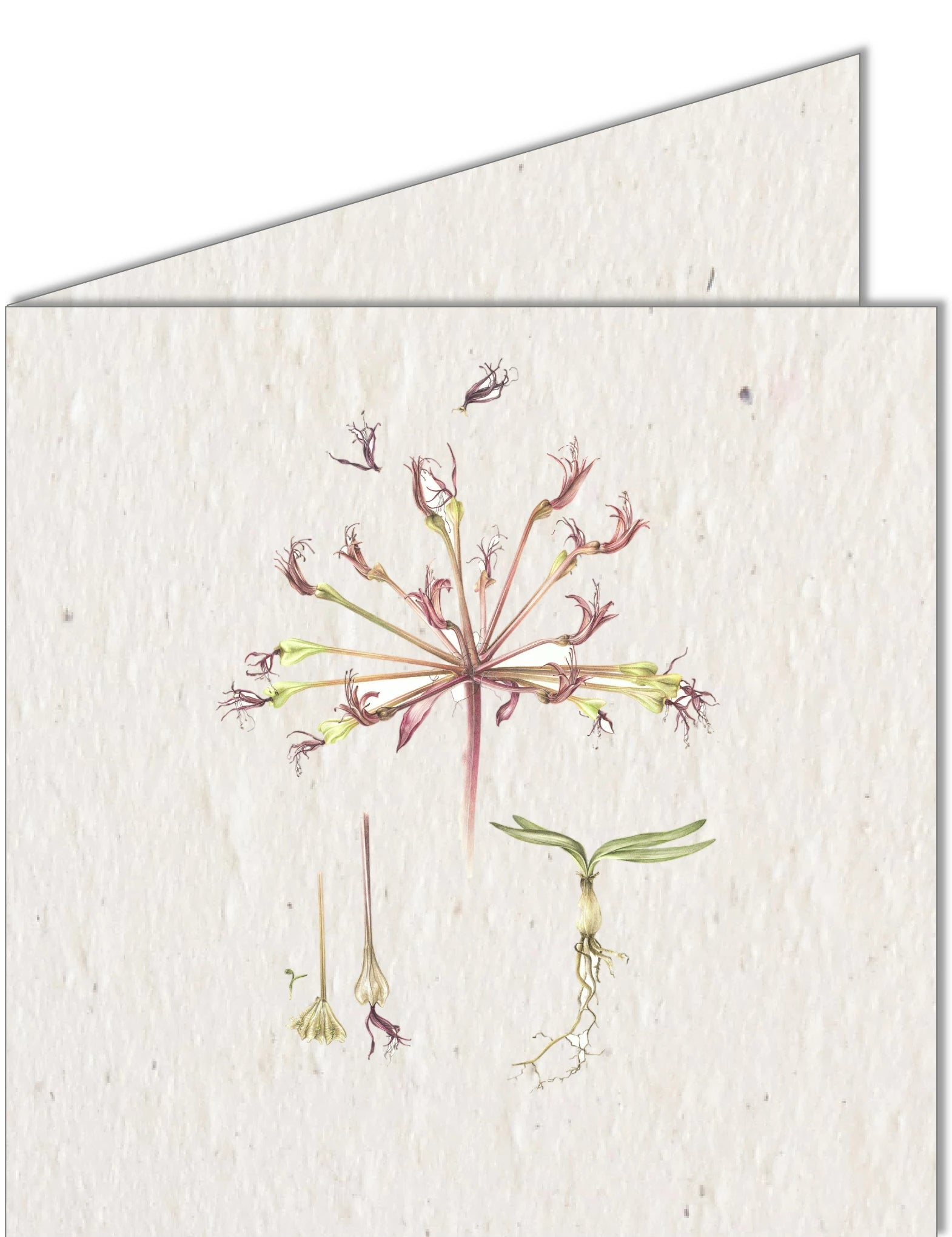 Greeting Card | Botanical plant