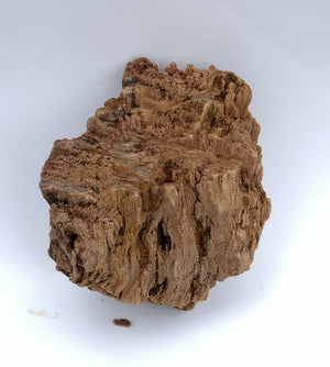Burmese Petrified Wood Stone