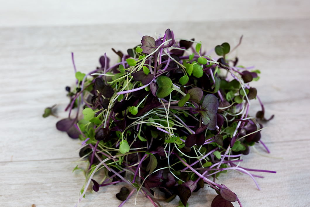 Microgreens -  Red Cabbage, Kale and Broccoli  - Neutral mix 40g
