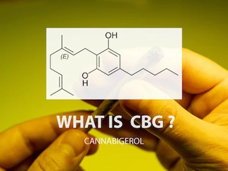 A Closer Look at CBG (Cannabigerol)