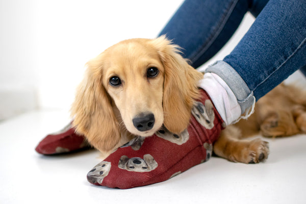 Evergreen | Autumn/winter range | Bespoke pet socks