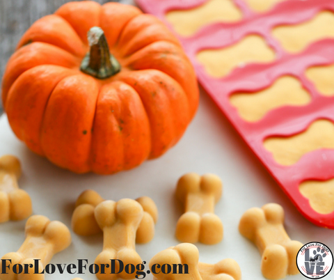 for love for dogs jewelry and more dog paw pumpkin