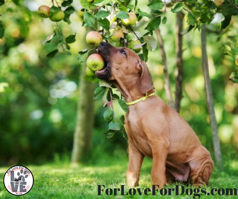 apples for love for dogs dog paw jewelry necklace ring bracelets great deal