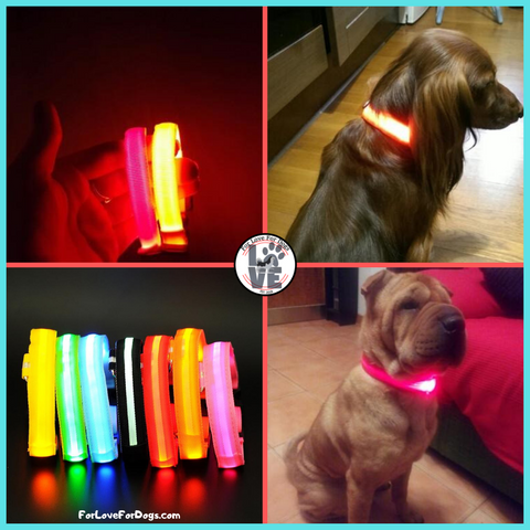 FLFD - Nylon LED Pet Collar forlovefordogs for love for dogs collars personalized
