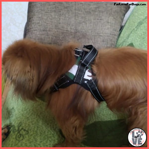 FLFD - Premium Adjustable Dog Harness