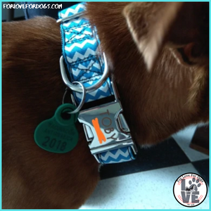 FLFD - Personalized Gingham Dog Collar
