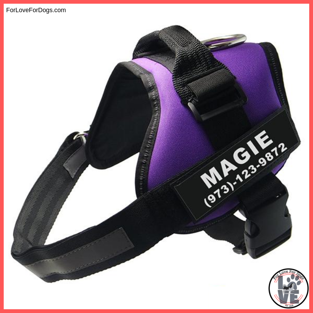 FLFD - Personalized No Pull Harness