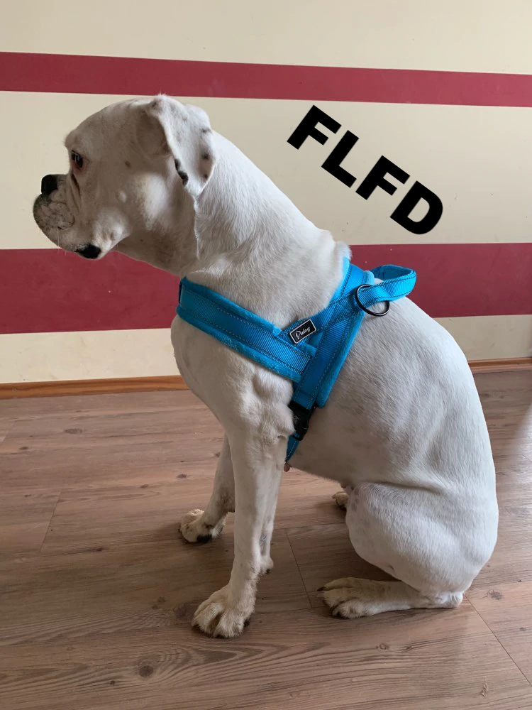 FLFD - Nylon Reflective Harness Vest Soft Flannel Padded