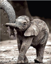 Load image into Gallery viewer, Baby Elephant Paint by Numbers