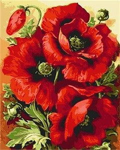 Big Red Poppy Flowers Paint by Numbers
