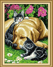Load image into Gallery viewer, Cats & Dog Paint by Numbers