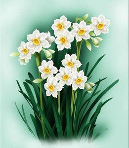Daffodil Flowers Paint by Numbers