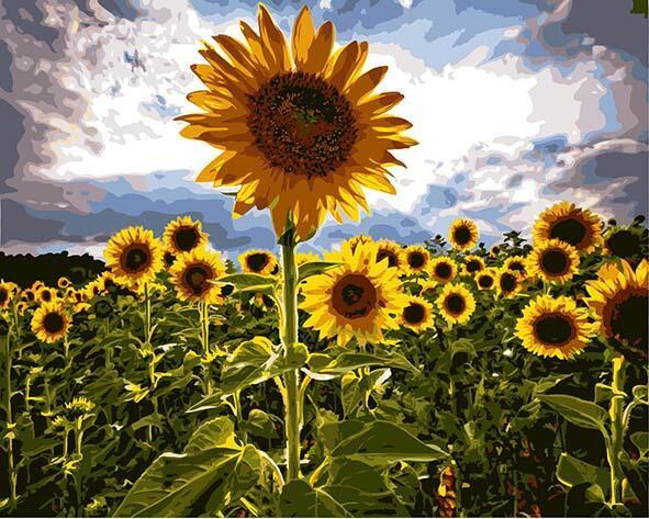 Elegant Sunflowers Paint by Numbers
