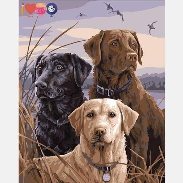 Labradors Paint by Numbers