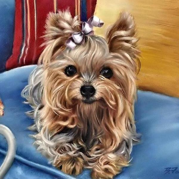 Maltese Puppy Paint by Diamonds