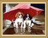 Pups & Umbrella - Paint by Numbers Kit