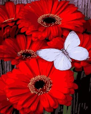 Red Flowers & Butterfly Paint by Numbers