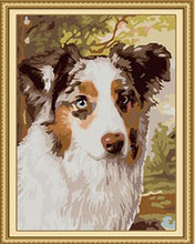 Load image into Gallery viewer, Sheltie Paint by Numbers