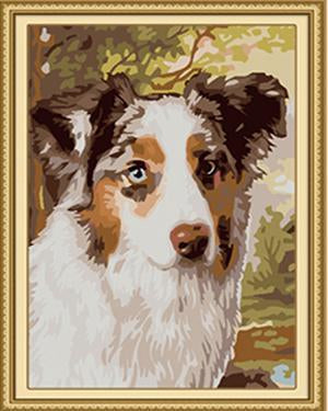 Sheltie Paint by Numbers