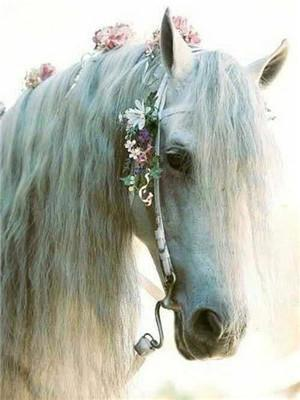 Stunning White Horse Paint by Diamonds