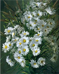 White Daisies Bunch Paint by Numbers