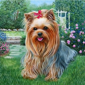Yorkshire Terrier Paint by Diamonds