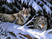Load image into Gallery viewer, Snow Wolves DIY Painting - Paint by Numbers