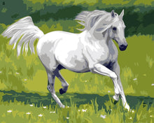 Load image into Gallery viewer, horse paint by numbers