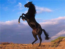 Load image into Gallery viewer, Black Horse painting
