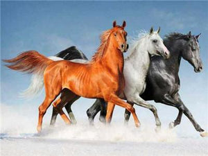 Stunning Photo or Running Horses in White brown and Black Colors