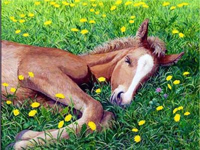Colt in the flowers field Painting