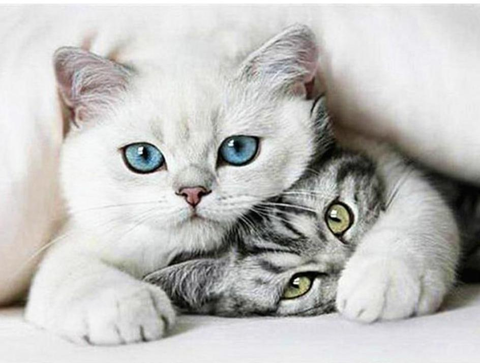 Gorgeous Cats