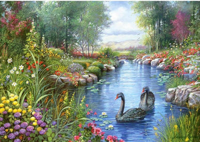 Swans in a Beautiful Pond