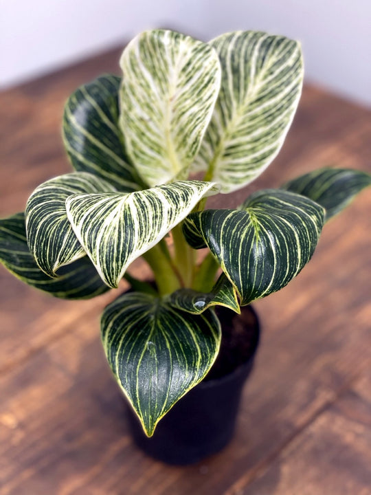Productivity boosting plants to help you work from home