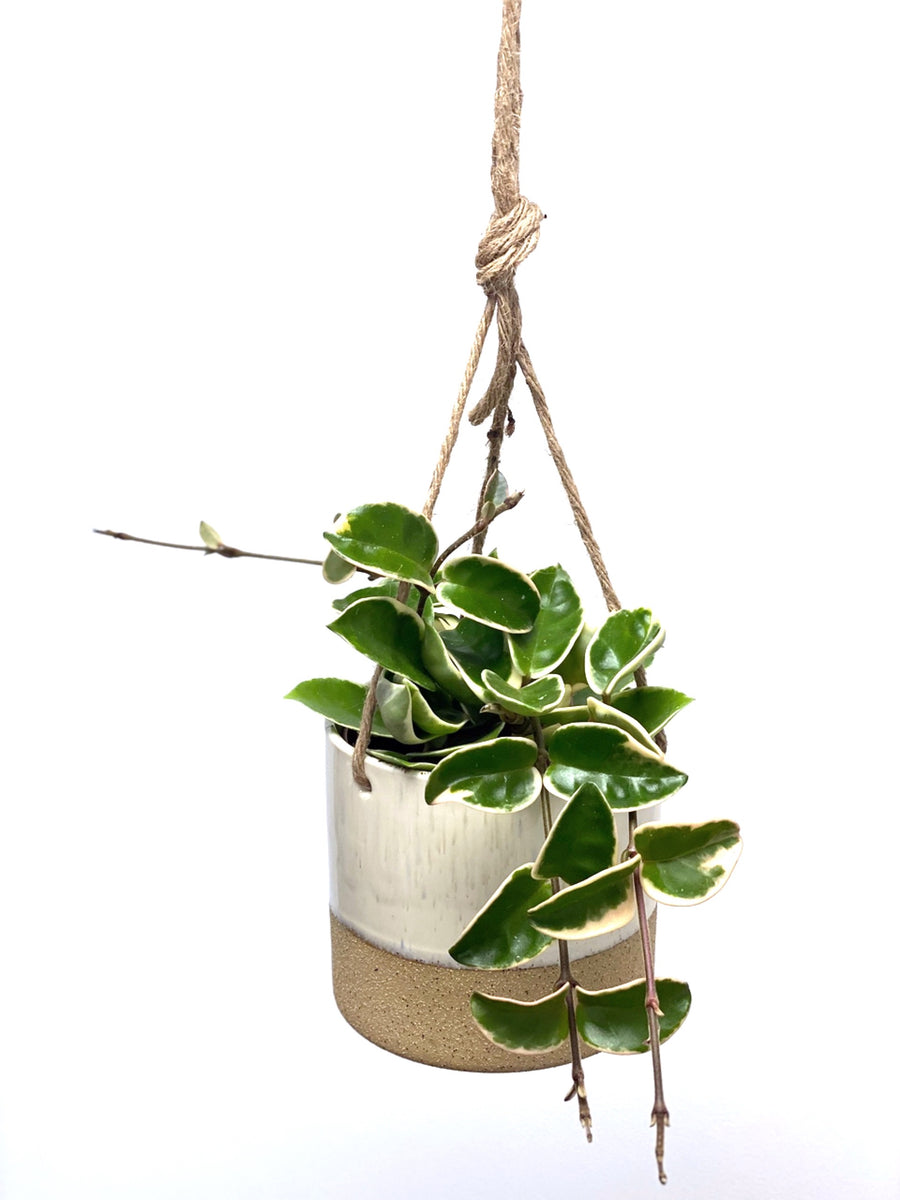 Duo Textured Ceramic Hanging Pot White