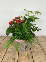 Mom Tin Planter