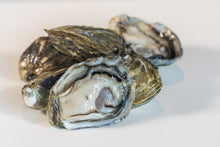 Load image into Gallery viewer, Two Dozen Oysters