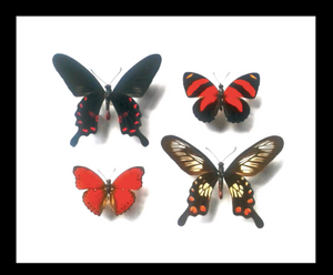 Red Winged Butterfly Combo