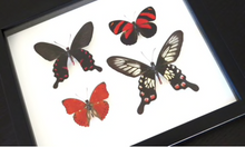 Load image into Gallery viewer, Red Winged Butterfly Combo